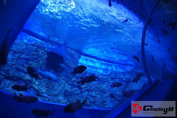 日本八景岛海洋乐园和《海贼王》主题(3)